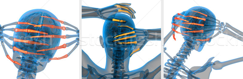 3d rendering  illustration of the human phalanges hand  Stock photo © maya2008
