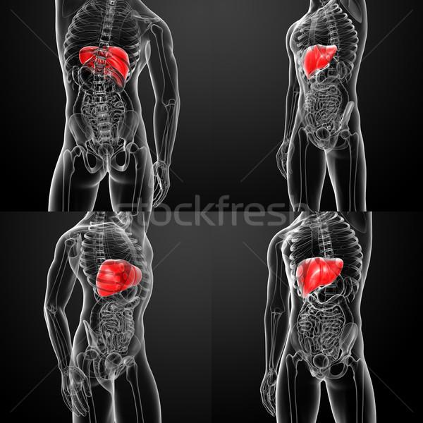 3D rendering human digestive system liver  Stock photo © maya2008