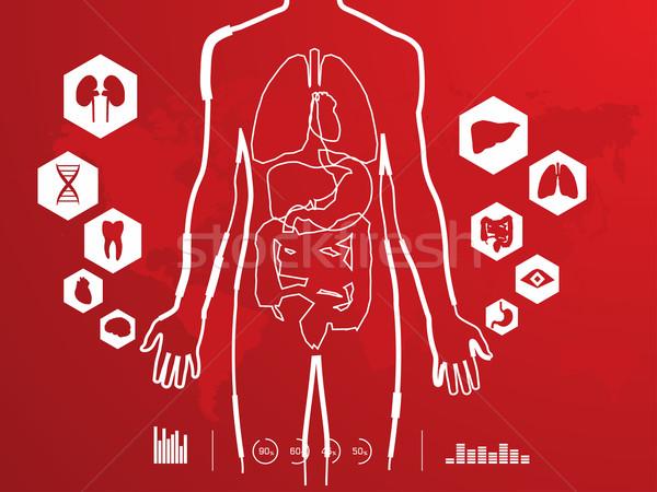 Anatomia humana médico fundo digital seta gráfico Foto stock © maya2008