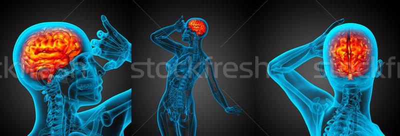 3d rendering medical illustration of the human brain Stock photo © maya2008