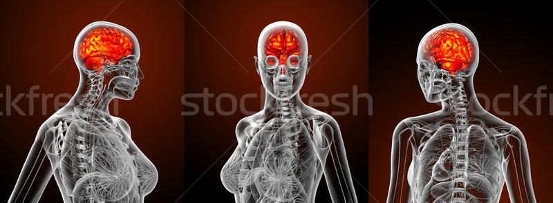 Foto d'archivio: 3D · medici · illustrazione · cervello · umano