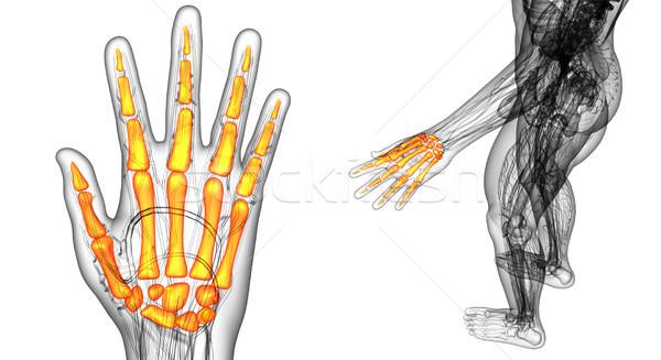 3D иллюстрация скелет стороны Сток-фото © maya2008