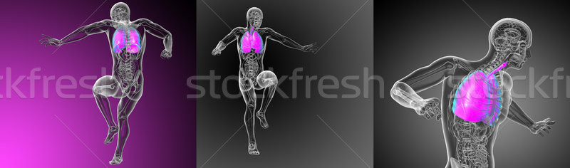 3d rendering medical illustration of the respiratory system Stock photo © maya2008