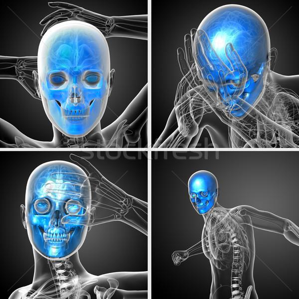 3d rendering medical illustration of the skull Stock photo © maya2008
