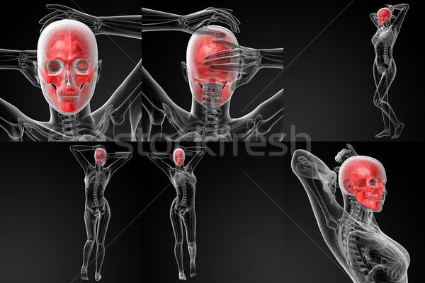 Stock photo: 3D rendering illustration of the skull bone