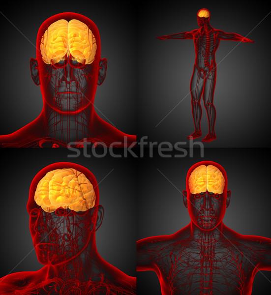 3D медицинской иллюстрация мозг Сток-фото © maya2008