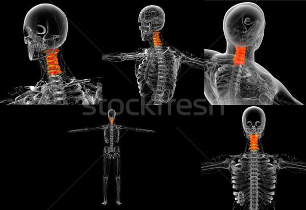 3D renderelt kép orvosi illusztráció nyak csont Stock fotó © maya2008