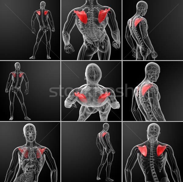 3D illustratie bot medische lichaam Stockfoto © maya2008