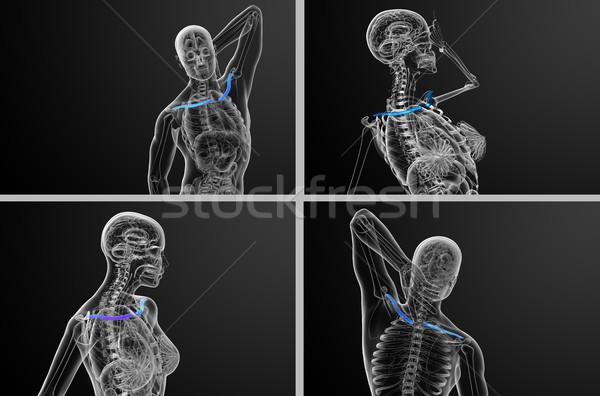 Stockfoto: 3D · medische · illustratie · bot