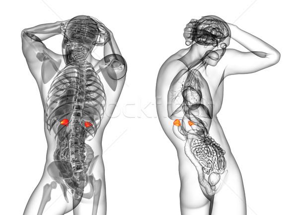 3D medici illustrazione umani Foto d'archivio © maya2008