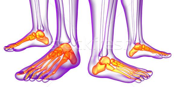 Stockfoto: 3D · medische · illustratie · voeten · bot