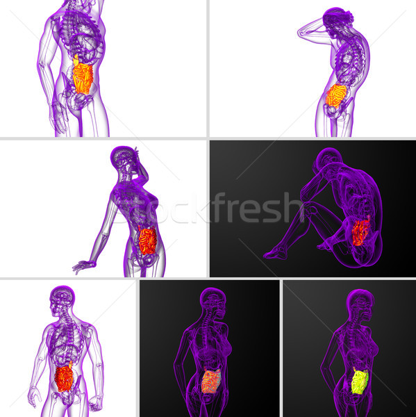 3d rendering  illustration of the small intestine Stock photo © maya2008