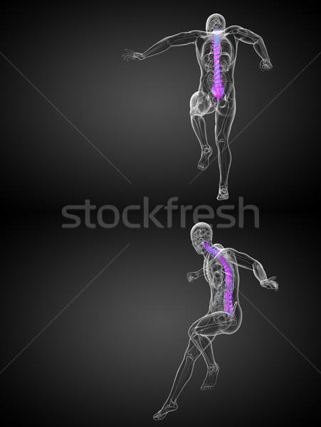 Сток-фото: 3D · медицинской · иллюстрация · человека · позвоночник