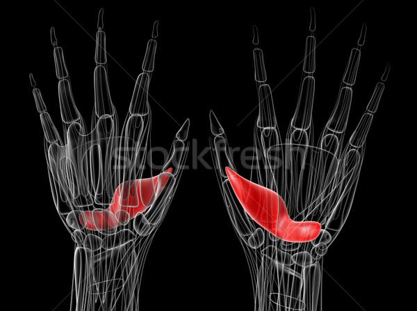 Medische illustratie gezondheid wetenschap grafische vinger Stockfoto © maya2008