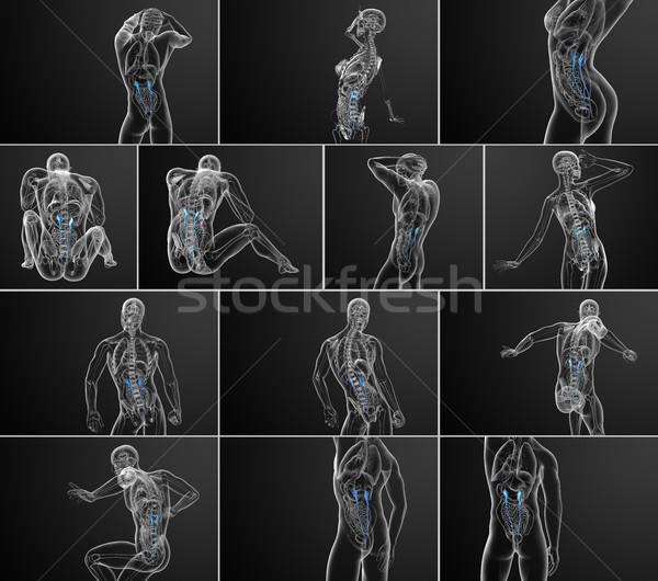 3D renderelt kép orvosi illusztráció Stock fotó © maya2008