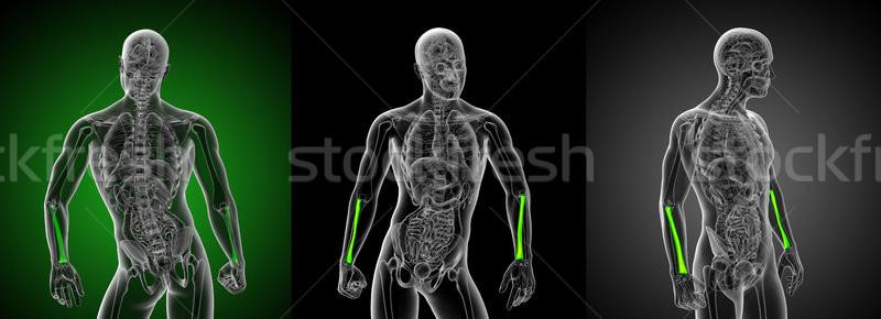 Сток-фото: 3D · медицинской · иллюстрация · кость