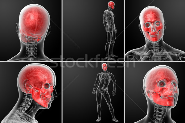 3d rendering human skull anatomy  Stock photo © maya2008