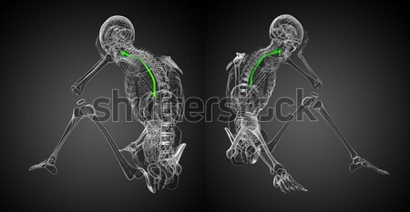 3d rendering medical illustration of the esophagus  Stock photo © maya2008