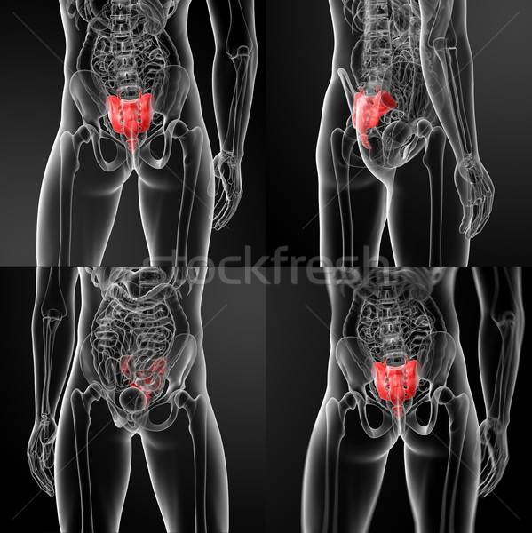 3d rendering illustration sacrum bone  Stock photo © maya2008