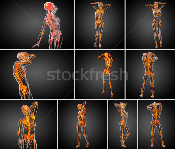 Stockfoto: 3D · medische · illustratie · skelet · bot