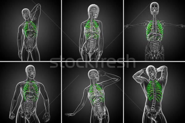 3D медицинской иллюстрация человека Сток-фото © maya2008