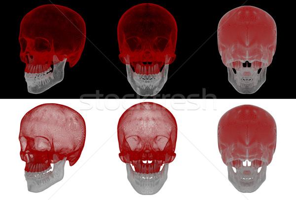 3d render medische illustratie schedel Stockfoto © maya2008