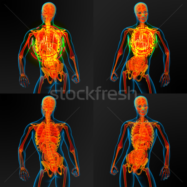 3d render illustration of the male anatomy  Stock photo © maya2008
