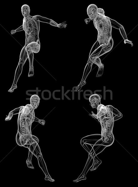 3D médico ilustração anatomia humana Foto stock © maya2008