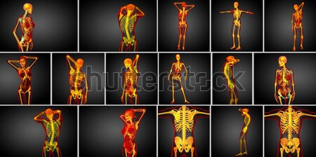 3D rendering illustration of the human skeleton Stock photo © maya2008