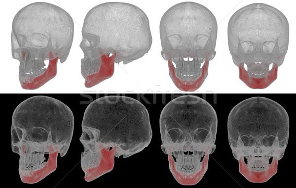 3d rendered illustration of jaw bone Stock photo © maya2008