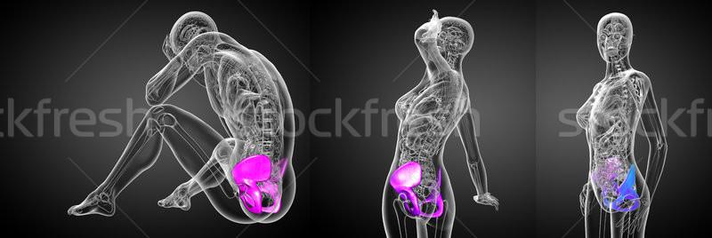 3d rendering medical illustration of the pelvis bone  Stock photo © maya2008