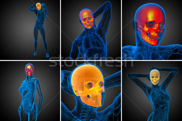 Stock photo: 3d rendering medical illustration of the skull