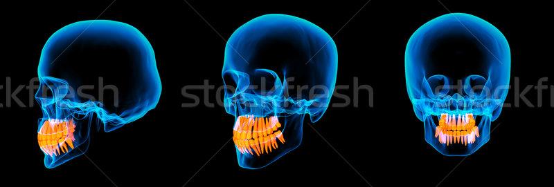 Сток-фото: 3d · визуализации · человека · рентгеновский · череп · черный · лице