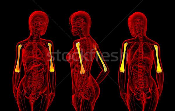 3D renderelt kép illusztráció női csont Stock fotó © maya2008