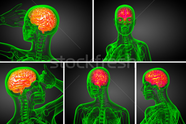 3d rendering medical illustration of the brain   Stock photo © maya2008