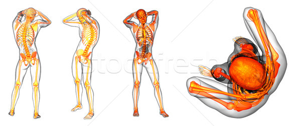 3D renderelt kép orvosi illusztráció emberi csontváz Stock fotó © maya2008