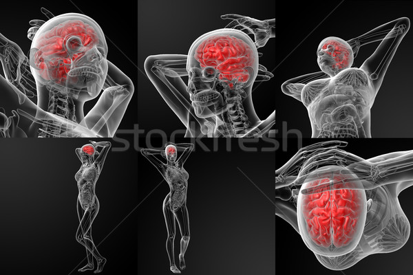 3D rendering illustration of the  brain Stock photo © maya2008