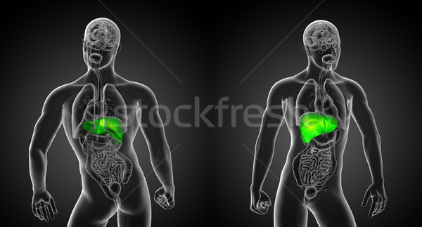 3d rendering illustration of the liver Stock photo © maya2008