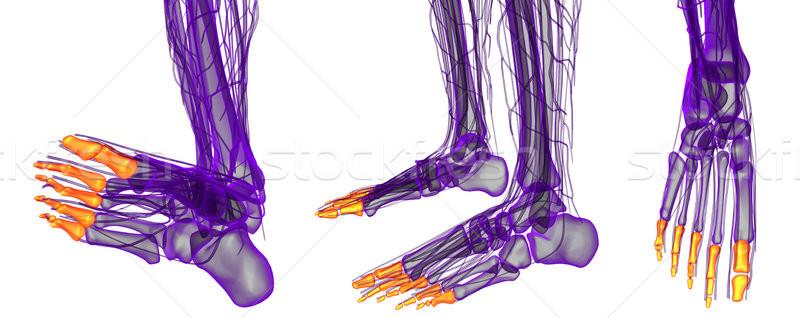 3D örnek insan ayak Stok fotoğraf © maya2008