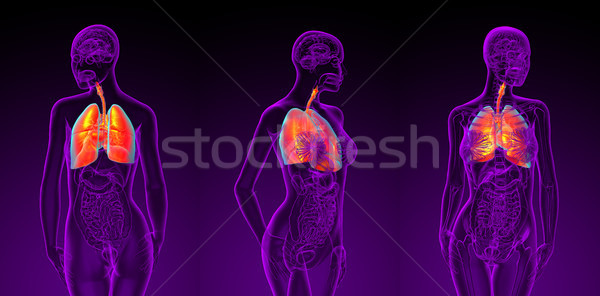 3d rendering illustration of the female respiratory system  Stock photo © maya2008