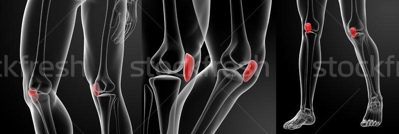 3d rendering illustration of the patella bone Stock photo © maya2008
