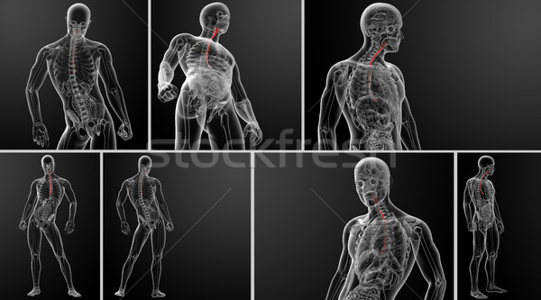3d rendering illustration of the esophagus  Stock photo © maya2008