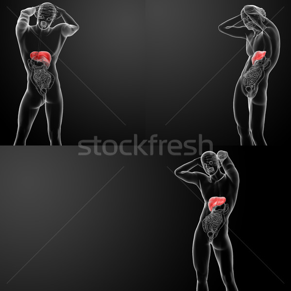 3D rendering of the human liver Stock photo © maya2008