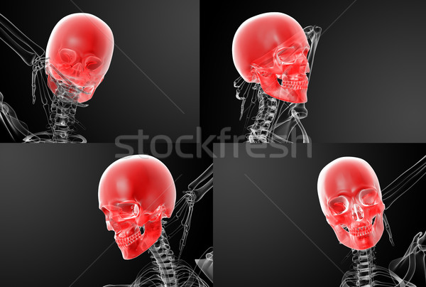 3d rendering skull X-rays Stock photo © maya2008