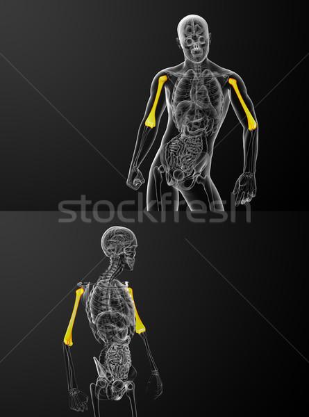 Foto d'archivio: 3D · medici · illustrazione · ossa