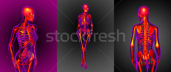 Сток-фото: 3D · медицинской · иллюстрация · скелет · ногу