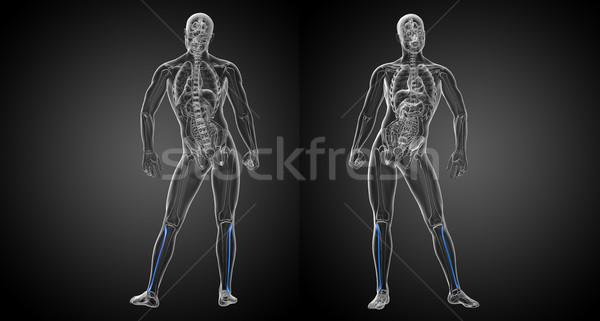 Stok fotoğraf: 3D · örnek · kemik · vücut · ağrı