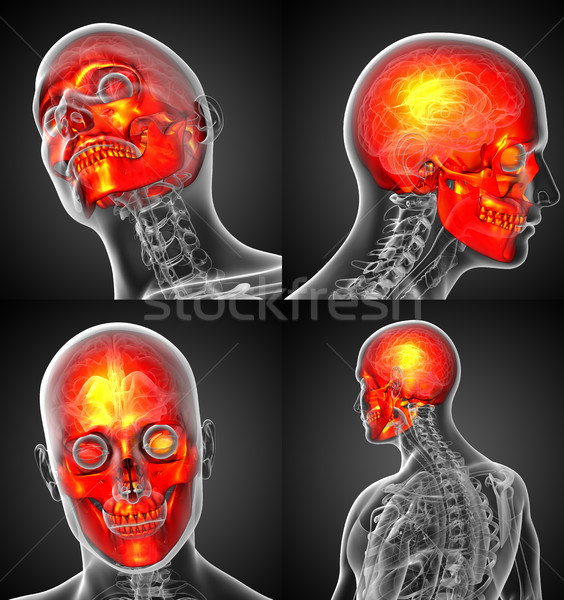 3d rendering medical illustration of the human skull  Stock photo © maya2008