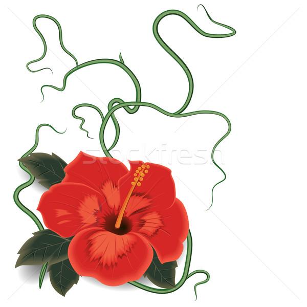 Hibiscus, flower vector Stock photo © Mayamy