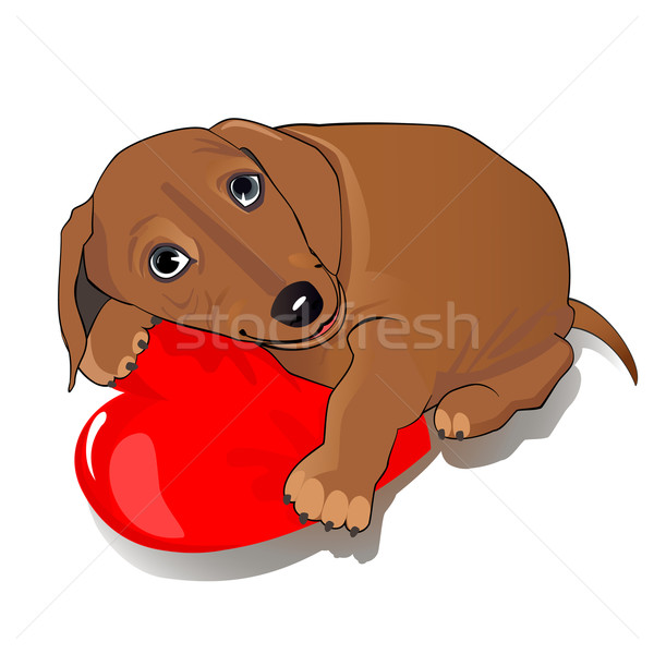 Dachshund dog heart Stock photo © Mayamy